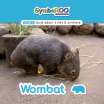 Gymba-TERM1-JAN-week03-Wombat