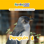 Gymba-TERM1-JAN-week04-Penguin