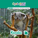 Gymba-TERM1-JAN-week05-Koala