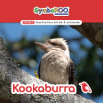 Gymba-TERM1-JAN-week07-Kookaburra