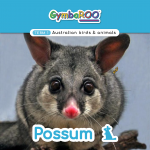 Gymba-TERM1-JAN-week08-Possum