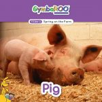 TKG_TB-SM-POSTS_TERM-3_SPRING-ON-THE-FARM_PIG (1)
