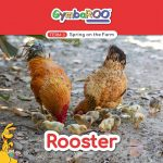 TKG_TB-SM-POSTS_TERM-3_SPRING-ON-THE-FARM_ROOSTER