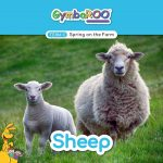 TKG_TB-SM-POSTS_TERM-3_SPRING-ON-THE-FARM_SHEEP